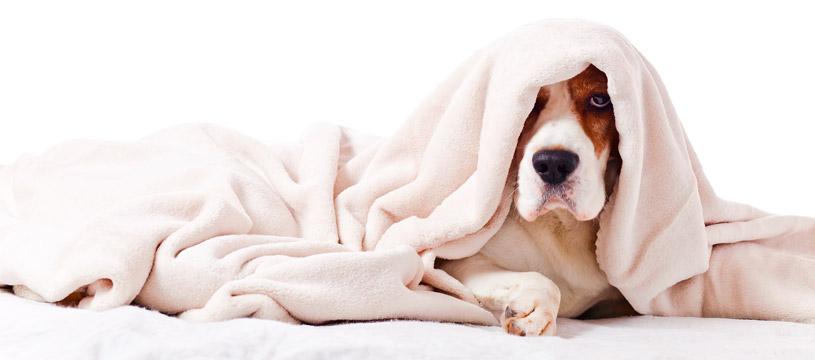 come lavare le coperte del cane