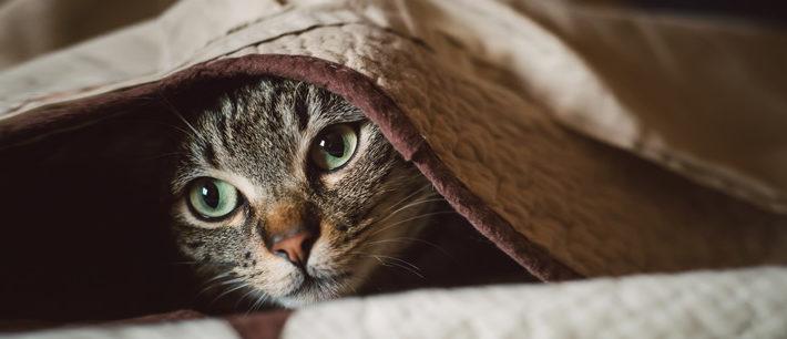 lavare tessuti e coperte degli animali in lavatrice