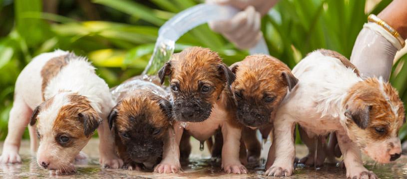 consigli per lavare i cuccioli di cane