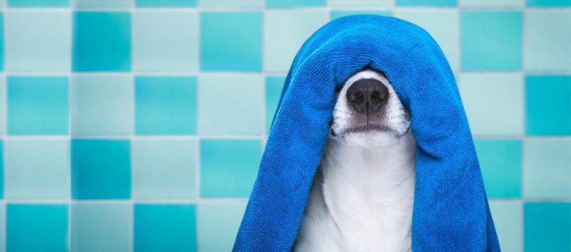 come lavare il cane, consigli utili per la pulizia del vostro animale preferito