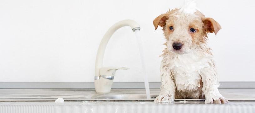 Come lavare un cucciolo di cane