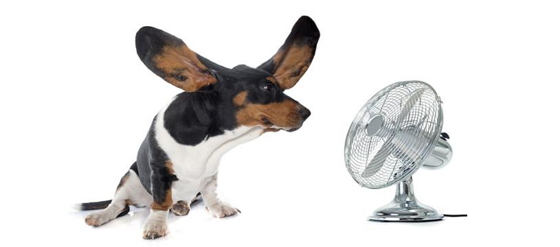 come pulire le orecchie del cane consigli utili per il tuo amico a 4 zampe