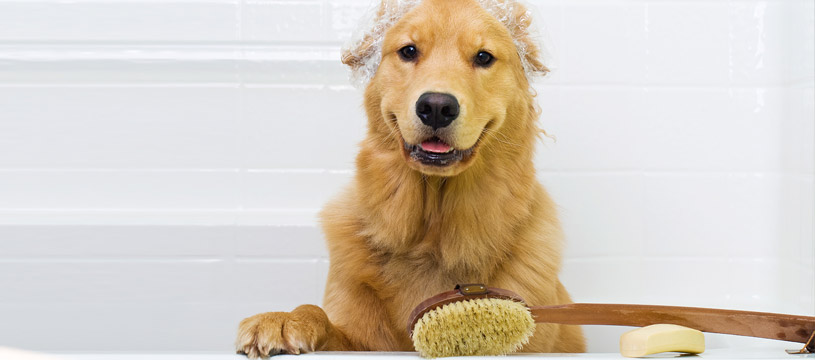 consigli utili per lavare il cane