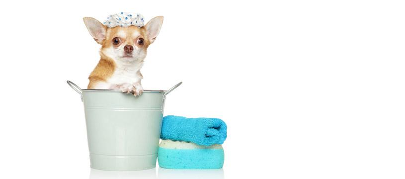 lavare il cane a secco