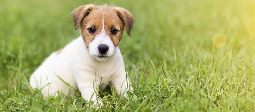 consigli per lavare il cucciolo di cane