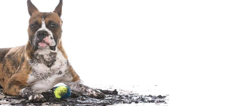 ogni quanto lavare il cane con acqua ozonizzata
