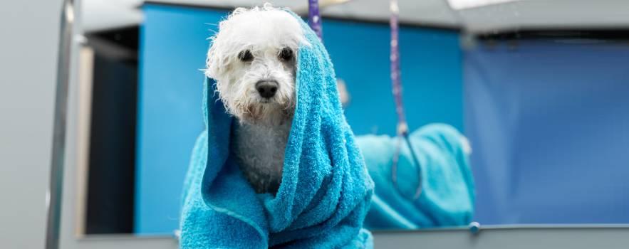 Utilizzare acqua con ozono per la pulizia dei cani