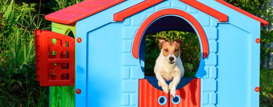 lavare la cuccia di cane con acqua ozonizzata