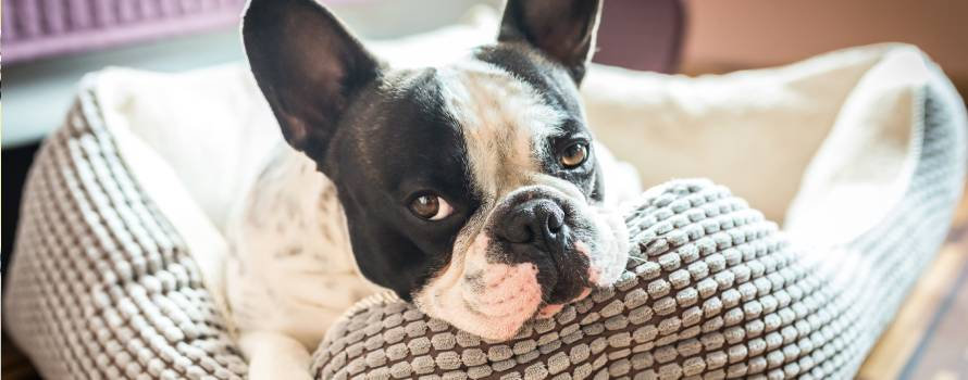 cuccia per cani come igienizzarla in modo naturale